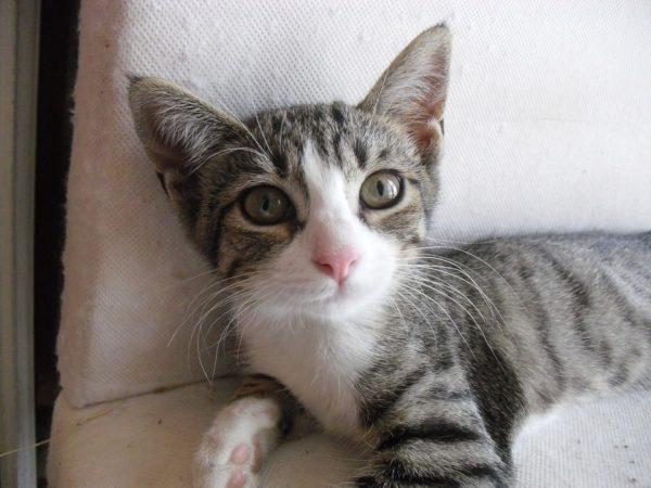 cat-74896_960_720